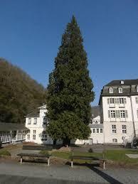 Bad Bertrich Liste Der Naturdenkmale In Bad Bertrich U2013 Wikipedia