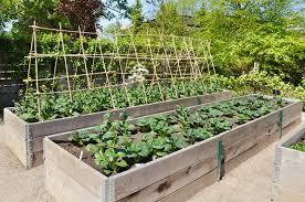 raised vegetable garden gardening design