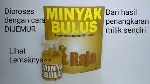 Minyak Bulus Asli Papua jual minyak bulus area malang jual minyak bulus asli papua jual