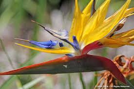 native plants and animals cape town janet davis explores colour