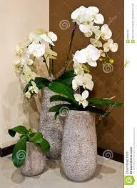 white orchids in designer vases stock photo image 68205102