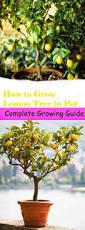Pinterest Small Garden Ideas by 51 Best Gardening Images On Pinterest Gardening Garden Ideas