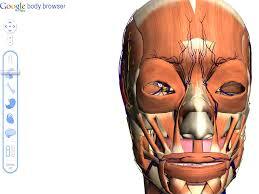 Google Body Anatomy Search The Human Body With Google Body Browser Cozy Digital