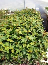 growing native plants from seed tipi mountain native plants ltd growing native plants for our