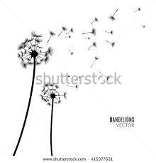 drawn dandelion silhouette pencil and in color drawn dandelion