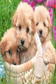 cute puppies 2 wallpapers puppy wallpapers hd android apps on google play