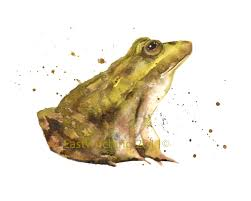 some frog sketches u2013 alison fennell art