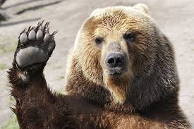 the meaning and symbolism of the word bear