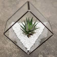 45 best succulent terrarium images on pinterest succulent