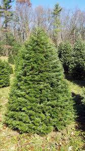 14 best hill farms christmas trees images on pinterest christmas