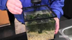 native aquatic plants uk care and handling of aquatic plants youtube