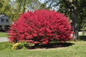 gardenatoz fall color landscape garden