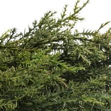 factory direct craft 72 realistic artificial vinyl cedar pine green