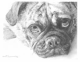 pug pencil drawing by mike theuer daler rowney