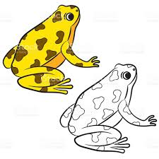 cartoon of poisondart frog coloring page stock vector art