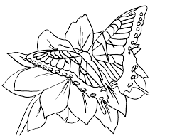 butterfly coloring pages free butterfly coloring pages tiger swallowtail
