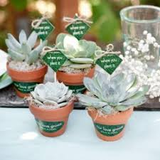 succulent wedding favors succulent wedding favors weddinggawker