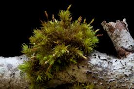 native plants of pacific northwest living in the land of mosses pacific northwest pest management
