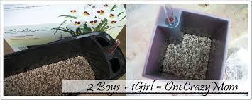 How To Make Self Watering Planters by Lechuza Planters A German Innovation Will Even Give You A Green