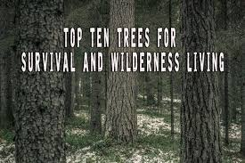 top ten trees for survival and wilderness living prepper s will