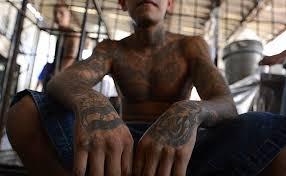 american drug cartels muscling in on australian market daily