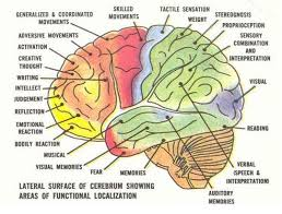 A Picture Of The Human Anatomy Best 25 Brain Parts Ideas On Pinterest Brain Anatomy Brain