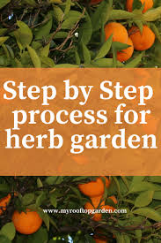 best herbs to grow in pots step by step process for your kitchen
