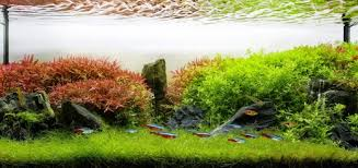 Most Beautiful Aquascapes Getting Started With Aquascaping U2022 Aquascaping Love