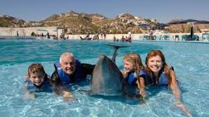 family swimming with dolphins in orlando florida avoya travel