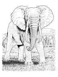 Imprimer des coloriages de elephant
