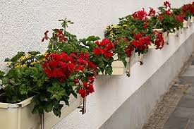 window shutter flower box free photos absolutely for download