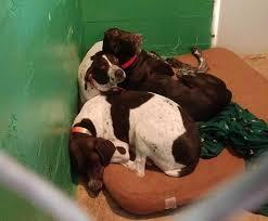 Creature Comforts Pet Sitting Creature Comforts Pet Retreat Pet Boarding In Loveland Colorado