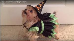 Lamb Chop Halloween Costumes Washpost Asks U0027is Dog U0027s Halloween Costume Sexist U0027