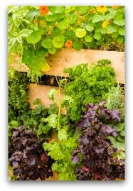 companion planting of vegetables