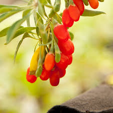 23 Diagrams That Make Gardening by How To Grow Goji Berries Organic Gardening Blog