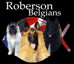 belgian sheepdog for sale in texas belgian tervuren for sale