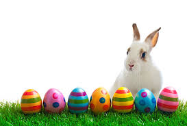 easter bunny easter bunny pictures images and stock photos istock