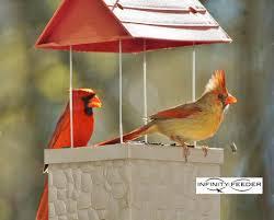 Cardinal Bird Home Decor by Wild Bird Feeder By Infinity Feeders For Patio Backyard Home