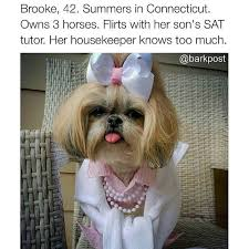 Grumpy Dog Meme - 41 dog bios that will definitely remind you of someone you know