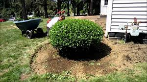The Proper Way To Make A Bed Landscape Bed Re Make And Mulch Youtube
