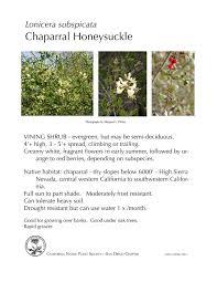 nevada native plant society chaparral honeysuckle lonicera subspicata u2014 cnps san diego