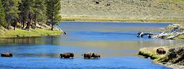 Wyoming wildlife tours images Jackson wyoming wildlife tours grizzly country wildlife adventures jpg