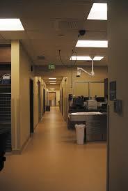 4 dead design fads in veterinary clinics
