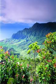 Hawaii vegetaion images Four favorite cruises the usa 39 s best cruise itineraries jpg