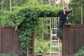 Trellis For Wisteria Mavis Garden Blog Planting Wisteria And Sprucing Up The Window