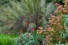 San Francisco Flower Garden by Winter San Francisco Botanical Garden Photobotanic