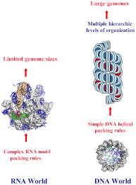 ijms free full text dna self assembly from chirality to