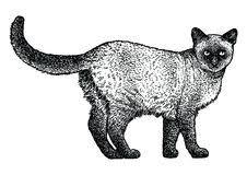 cat line drawing stock illustrations u2013 5 346 cat line drawing