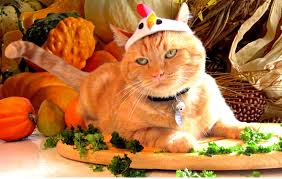 these 24 cats thanksgiving or at least the food