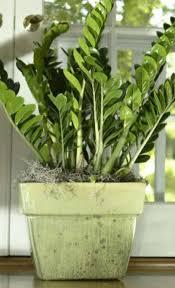 indoor plants houston chronicle